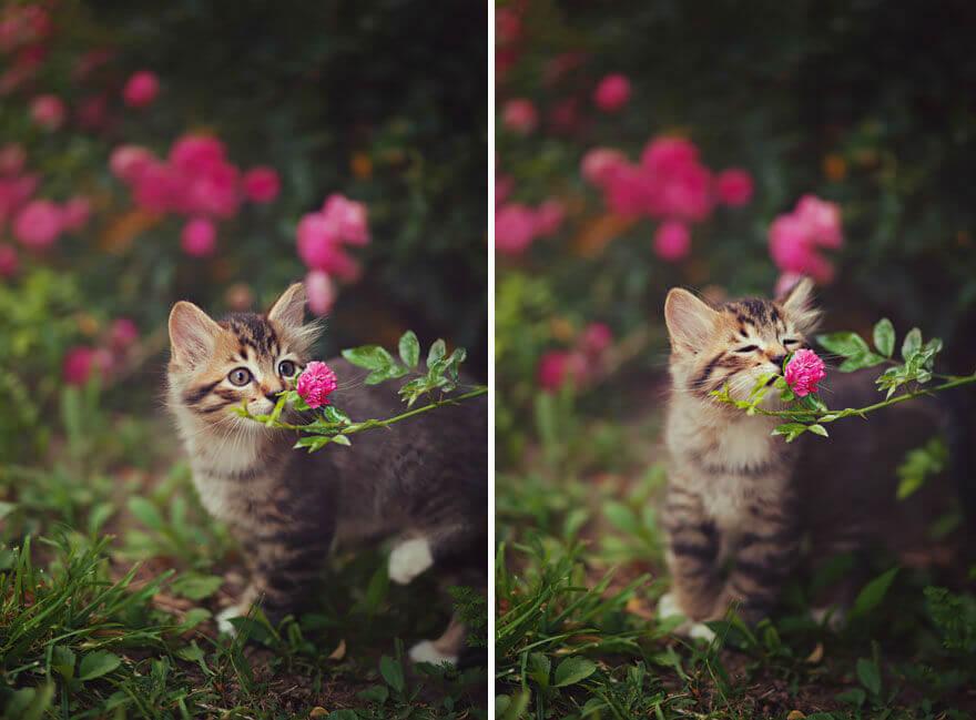ароматерапия и котенок
