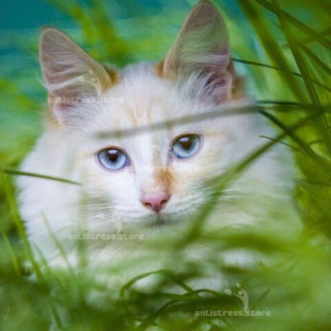 ароматерапия и животные