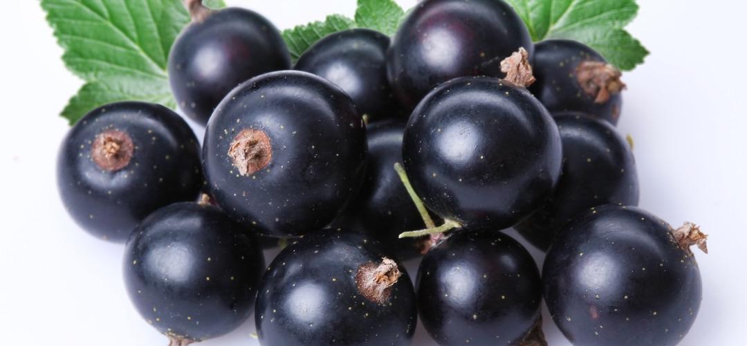 Эфирное масло черная смородина